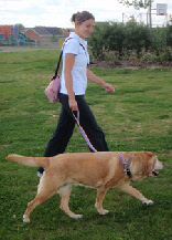 Caroline providing a Dog Walking Service.